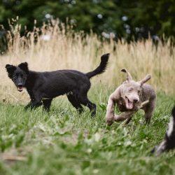 HundeschuleZeitpunktHund21.jpg