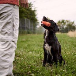 HundeschuleZeitpunktHund32.jpg