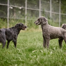 HundeschuleZeitpunktHund43.jpg