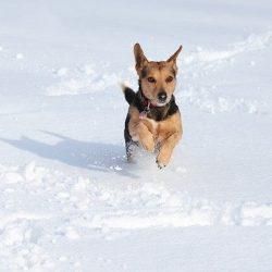 dog-3969760_640-1.jpg